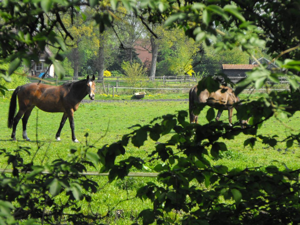 horses in field spadreams photo contest