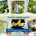 6 Finalists of the #hellospringcontest