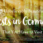 8 Unbelievably Beautiful Forests in Germany You Have to Visit