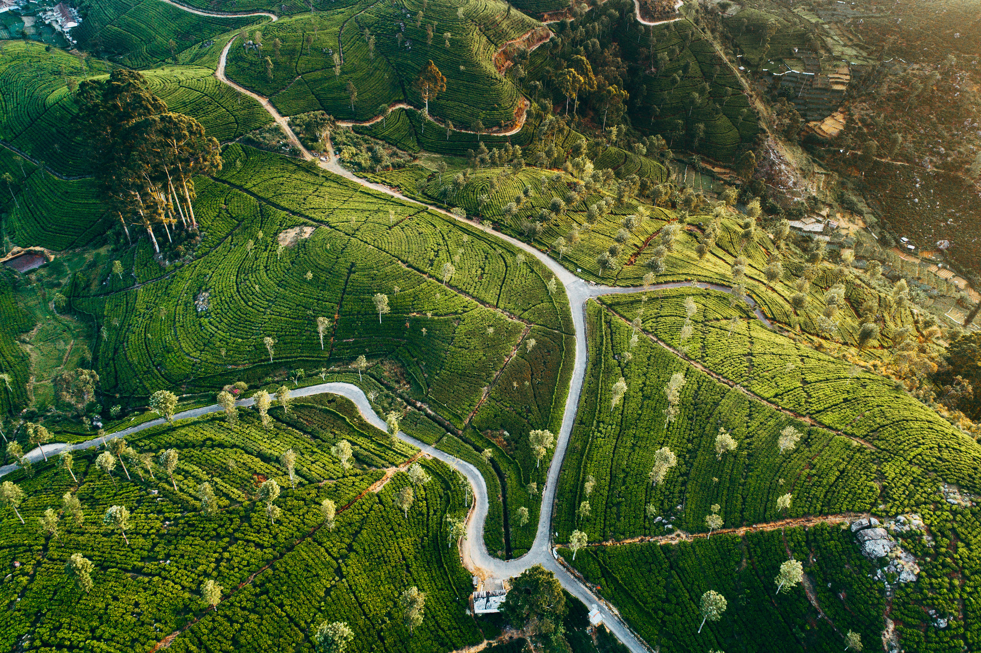 Aerial view on green tea plantation in mountains in Sri Lanka.