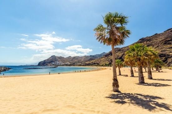 Tenerife Palm Tree